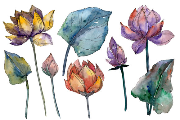 Print on Demand: Lotus Flower Watercolor Graphic Illustrations By MyStocks