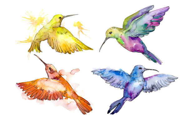 Print on Demand: Nature World Bird Hummingbird Watercolor Graphic Illustrations By MyStocks