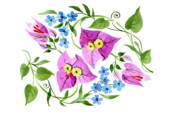 Print on Demand: Ornament of Bougainvillea  Pink Graphic Illustrations By MyStocks
