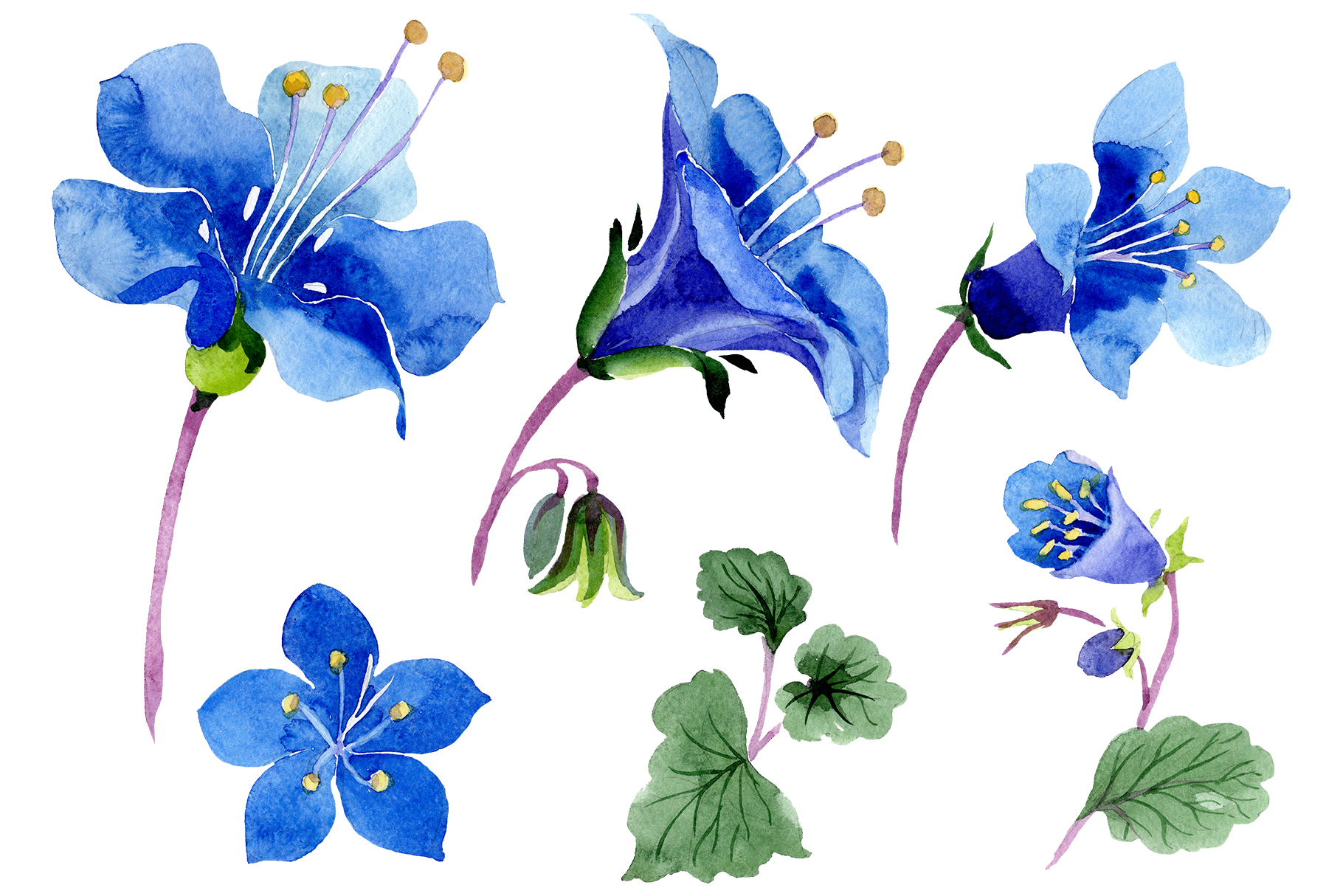 Download Free Phacelia Bellflower Blue Flower Graphic By Mystocks Creative for Cricut Explore, Silhouette and other cutting machines.