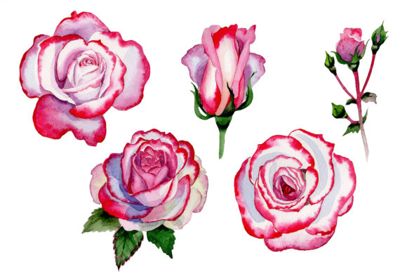 Print on Demand: Pink Rose Good Morning Watercolor Png Graphic Illustrations By MyStocks