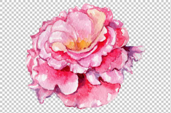 Print on Demand: Pink Rose Strength of Love Watercolor Graphic Illustrations By MyStocks - Image 2