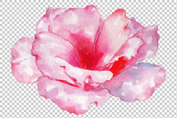 Print on Demand: Pink Rose Strength of Love Watercolor Graphic Illustrations By MyStocks - Image 3