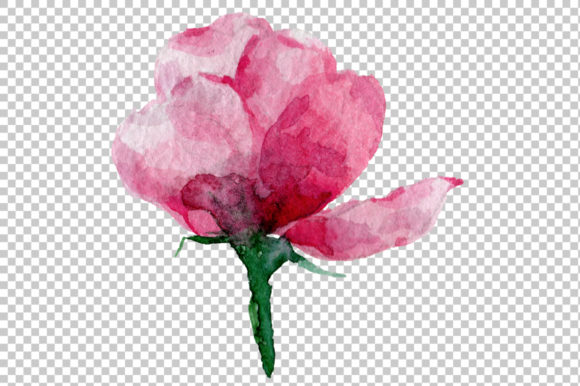 Print on Demand: Pink Rose Strength of Love Watercolor Graphic Illustrations By MyStocks - Image 5