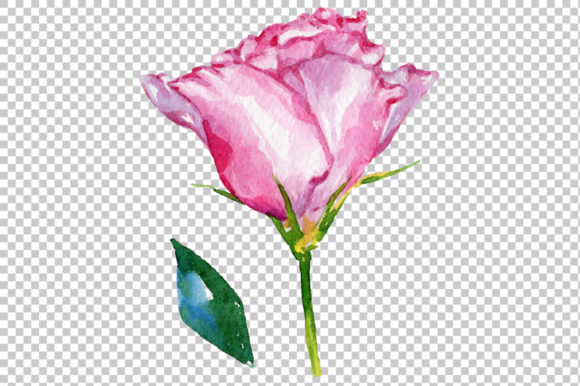 Print on Demand: Pink Rose Strength of Love Watercolor Graphic Illustrations By MyStocks - Image 7