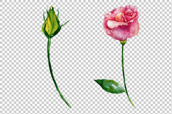 Print on Demand: Pink Rose Strength of Love Watercolor Graphic Illustrations By MyStocks - Image 9