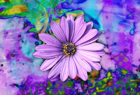 Print on Demand: Purple African Daisy Blooms Graphic Photos By JLBIMAGES - Image 1