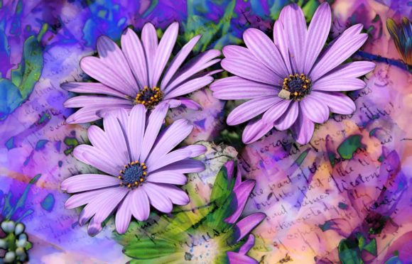 Print on Demand: Purple African Daisy Blooms Graphic Photos By JLBIMAGES