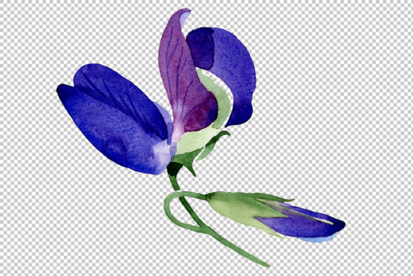 Print on Demand: Purple Sweet Pea Flower Watercolor Graphic Illustrations By MyStocks - Image 2