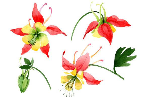 Print on Demand: Red Aquilegia Flower Watercolor Png Graphic Illustrations By MyStocks