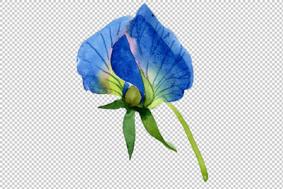 Print on Demand: Sweet Pea Blue Watercolor Png Graphic Illustrations By MyStocks - Image 3