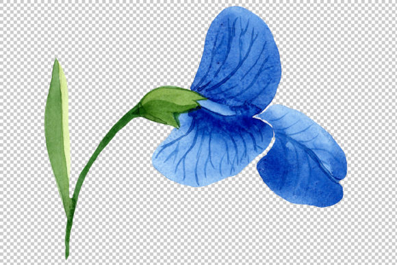 Print on Demand: Sweet Pea Blue Watercolor Png Graphic Illustrations By MyStocks - Image 5