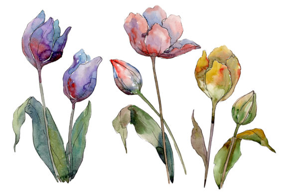 Download Free Tulips Flower Watercolor Graphic By Mystocks Creative Fabrica for Cricut Explore, Silhouette and other cutting machines.