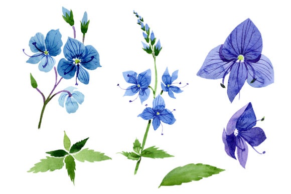Print on Demand: Veronica Flower Blue Watercolor Png Graphic Illustrations By MyStocks