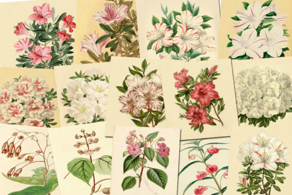 Print on Demand: Vintage Botanical Illustration Graphic Illustrations By retrowalldecor