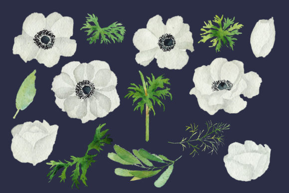 Print on Demand: Watercolour Anemone, White, Blue Anemone Graphic Illustrations By Primafox Design - Image 2