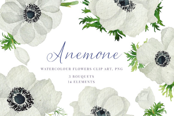Print on Demand: Watercolour Anemone, White, Blue Anemone Graphic Illustrations By Primafox Design