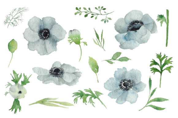 Print on Demand: Watercolour Anemone Graphic Illustrations By Primafox Design - Image 2