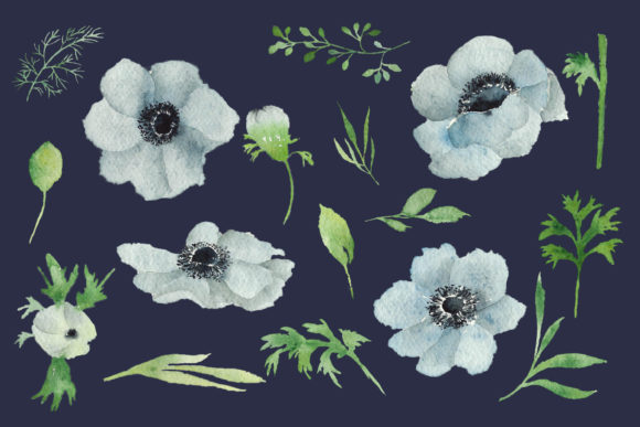 Print on Demand: Watercolour Anemone Graphic Illustrations By Primafox Design - Image 4