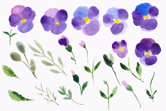 Print on Demand: Watercolour Flower Violets Clipart Graphic Illustrations By Primafox Design - Image 3