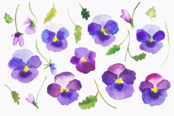Print on Demand: Watercolour Flower Violets Clipart Graphic Illustrations By Primafox Design - Image 4