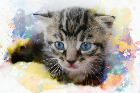 Print on Demand: Adorable Tabby Kitten Graphic Photos By JLBIMAGES