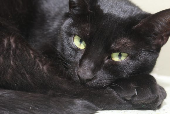 Print on Demand: Beautiful Black Cat Graphic Photos By JLBIMAGES - Image 1