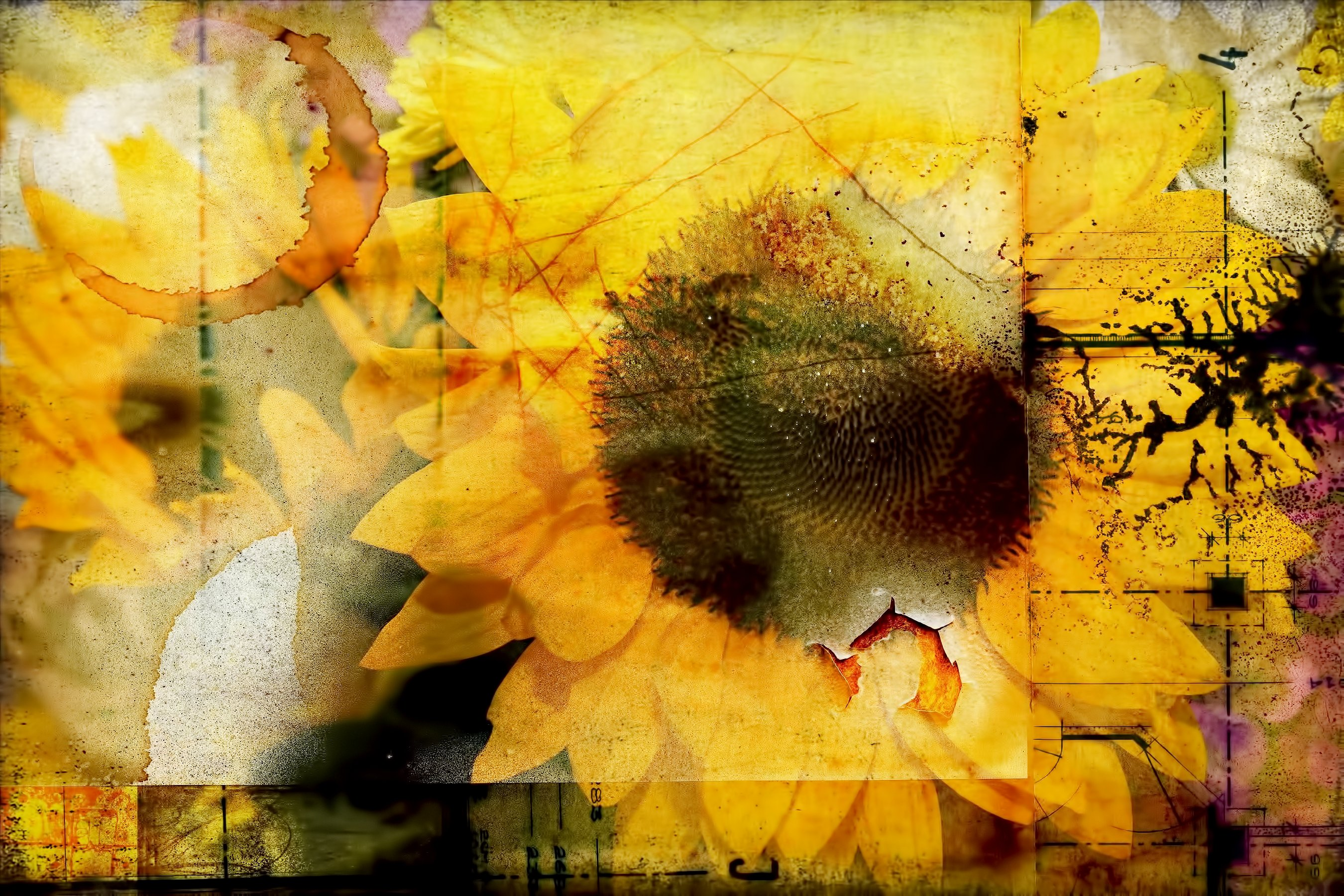 Beautiful Sunflower Graphic By Jlbimages Creative Fabrica