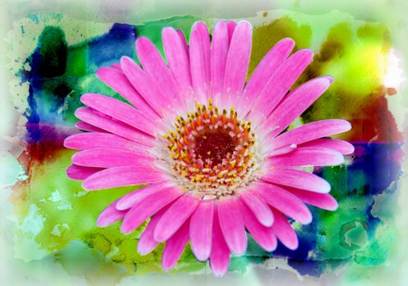 Print on Demand: Pink Gerber Daisy Graphic Photos By JLBIMAGES - Image 1