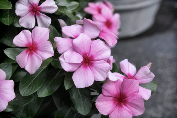 Print on Demand: Pretty Pink Flowers Graphic Photos By JLBIMAGES