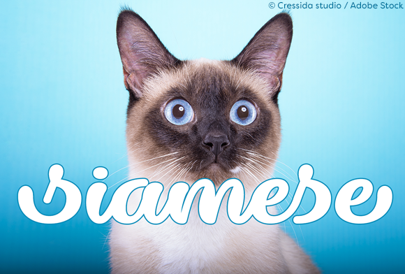 Print on Demand: Dillon the Cat Script & Handwritten Font By Misti - Image 2