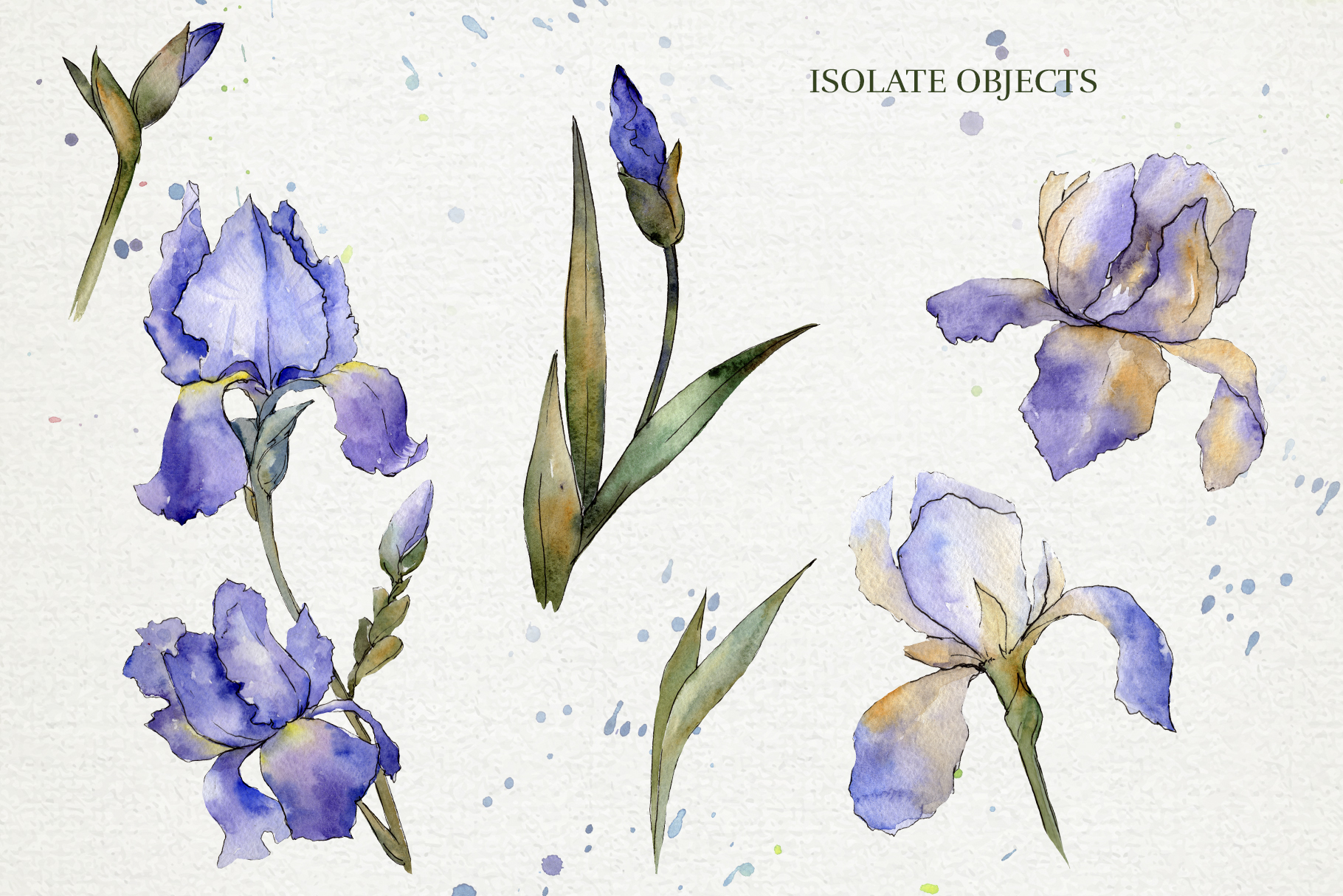 Download Free Blue Irises Flowers Morning Dawn Graphic By Mystocks Creative for Cricut Explore, Silhouette and other cutting machines.