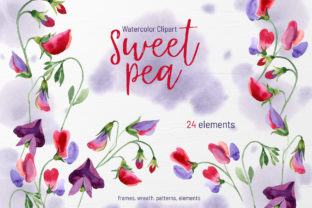Watercolor Flowers Sweet Pea PNG Graphic By MyStocks
