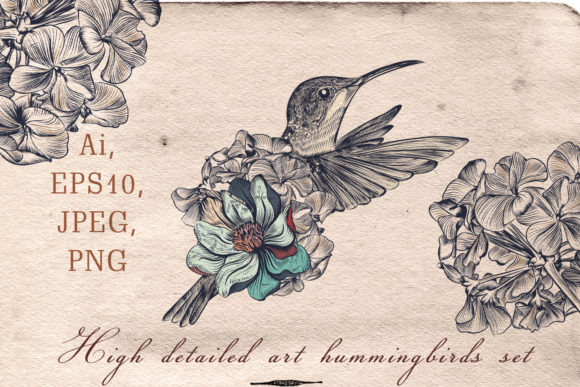 Collection of Vector Hummingbirds Graphic Objects By fleurartmariia