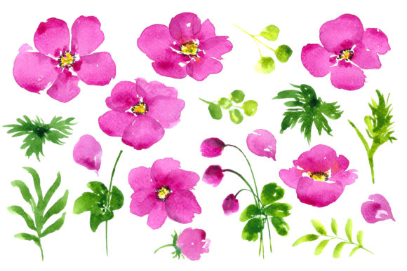 Print on Demand: Watercolour Pink Anemones Graphic Illustrations By Primafox Design - Image 2