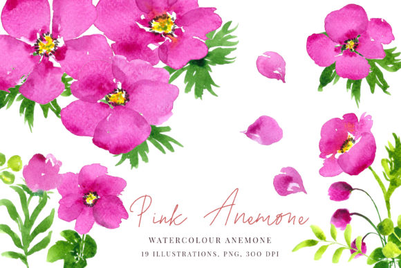 Print on Demand: Watercolour Pink Anemones Graphic Illustrations By Primafox Design