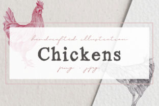 Hand Drawn Chicken Illustrations Graphic By nantia