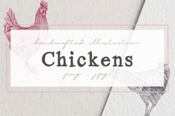 Download Free Hand Drawn Chicken Illustrations Graphic By Nantia Creative for Cricut Explore, Silhouette and other cutting machines.