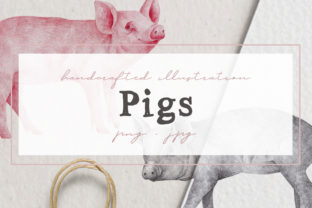 Hand Drawn Pigs Illustrations Graphic By nantia