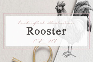 Hand Drawn Rooster Illustration Graphic By nantia