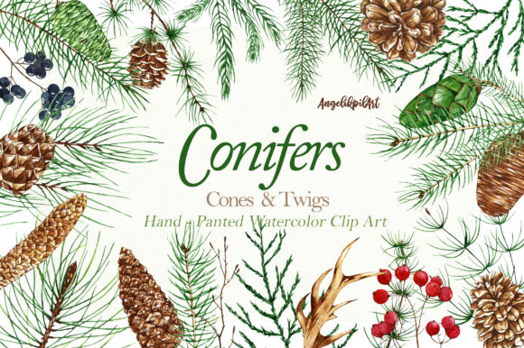 Print on Demand: Conifers. Cones&Twigs Watercolor Graphic Illustrations By Angela Pylypenko