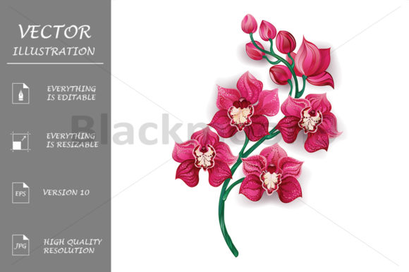 Bright Pink Orchid Graphic Illustrations By Blackmoon9