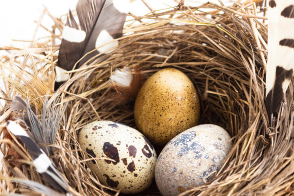 Easter Composition with Bird Nest Eggs Graphic Holidays By fleurartmariia - Image 2