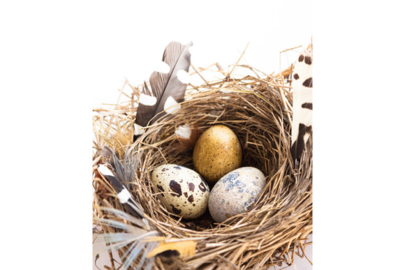 Easter Composition with Bird Nest Eggs Graphic Holidays By fleurartmariia - Image 3