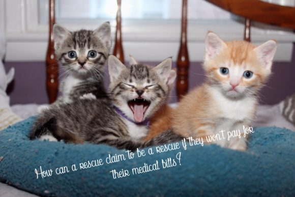 Print on Demand: Adorable Bunch of Kittens Graphic Photos By JLBIMAGES