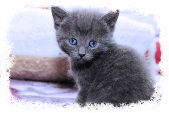 Print on Demand: Adorable Gray Kitten Graphic Photos By JLBIMAGES - Image 1