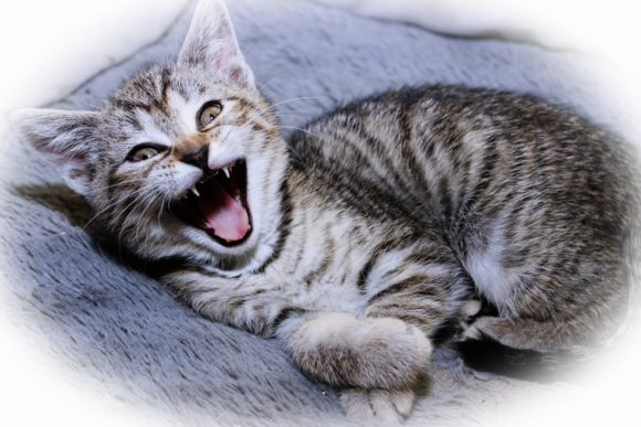 Print on Demand: Adorable Tabby Kitten Graphic Photos By JLBIMAGES - Image 1