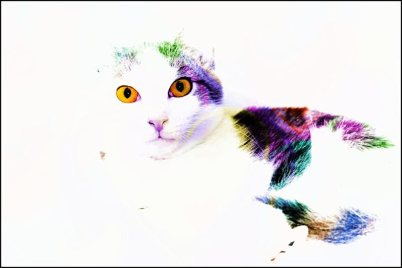 Print on Demand: Beautiful Cat Graphic Photos By JLBIMAGES - Image 1