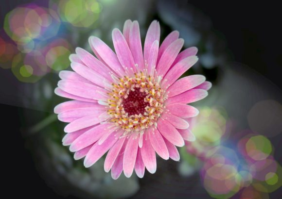 Print on Demand: Beautiful Daisies Graphic Photos By JLBIMAGES