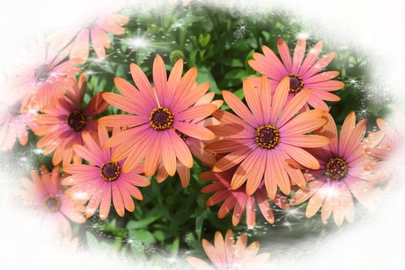 Print on Demand: Beautiful Daisies Graphic Photos By JLBIMAGES - Image 1